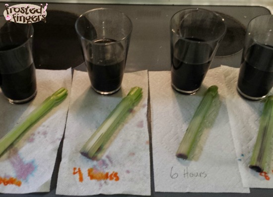 Celery Capillary Project #Homeschool #Science
