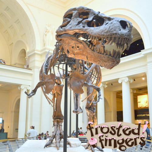 Tyrannosaurus Rex, Chicago Field Museum