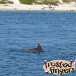Dolphin Cruise #Gulfcoast #Brandcation