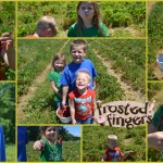 Strawberry Picking at Johnson's Farm