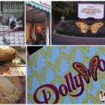 Dollywood #Review #Brandcation #PigeonForge #Dollywood #WildEagle