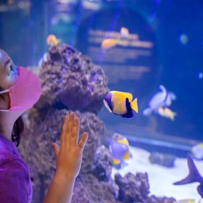 Free Days for Residents of Illinois at the Shedd Aquarium