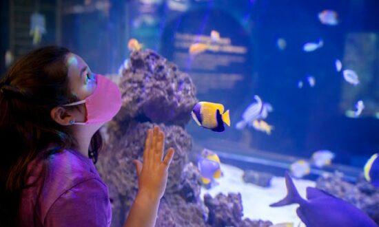 Illinois resident free days at Shedd Aquarium